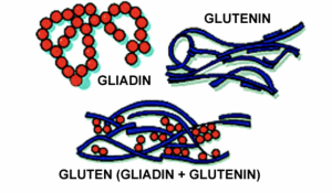 Gliadins and Glutelin Proteins